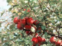 Vita et Pax - Fruitboom